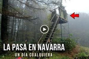Así es un día cualquiera de pasa de palomas en un puesto de Navarra