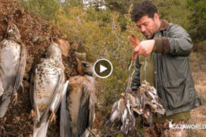 Póker de zorzales, caza de las 4 especies de zorzal