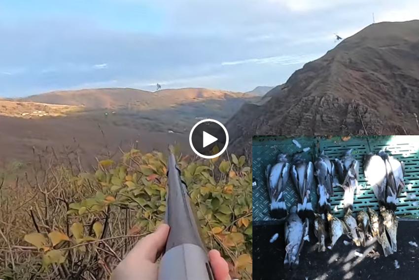 Capturas de palomas un día cualquiera palomeras navarras videoblog