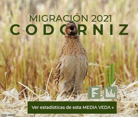 Migración codorniz 2021